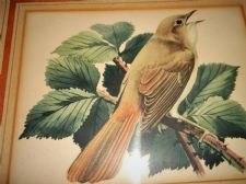 ANTIQUE FRAMED GLAZED ORIGINAL WATERCOLOUR PAINTING BIRD SINGING IN BRANCH